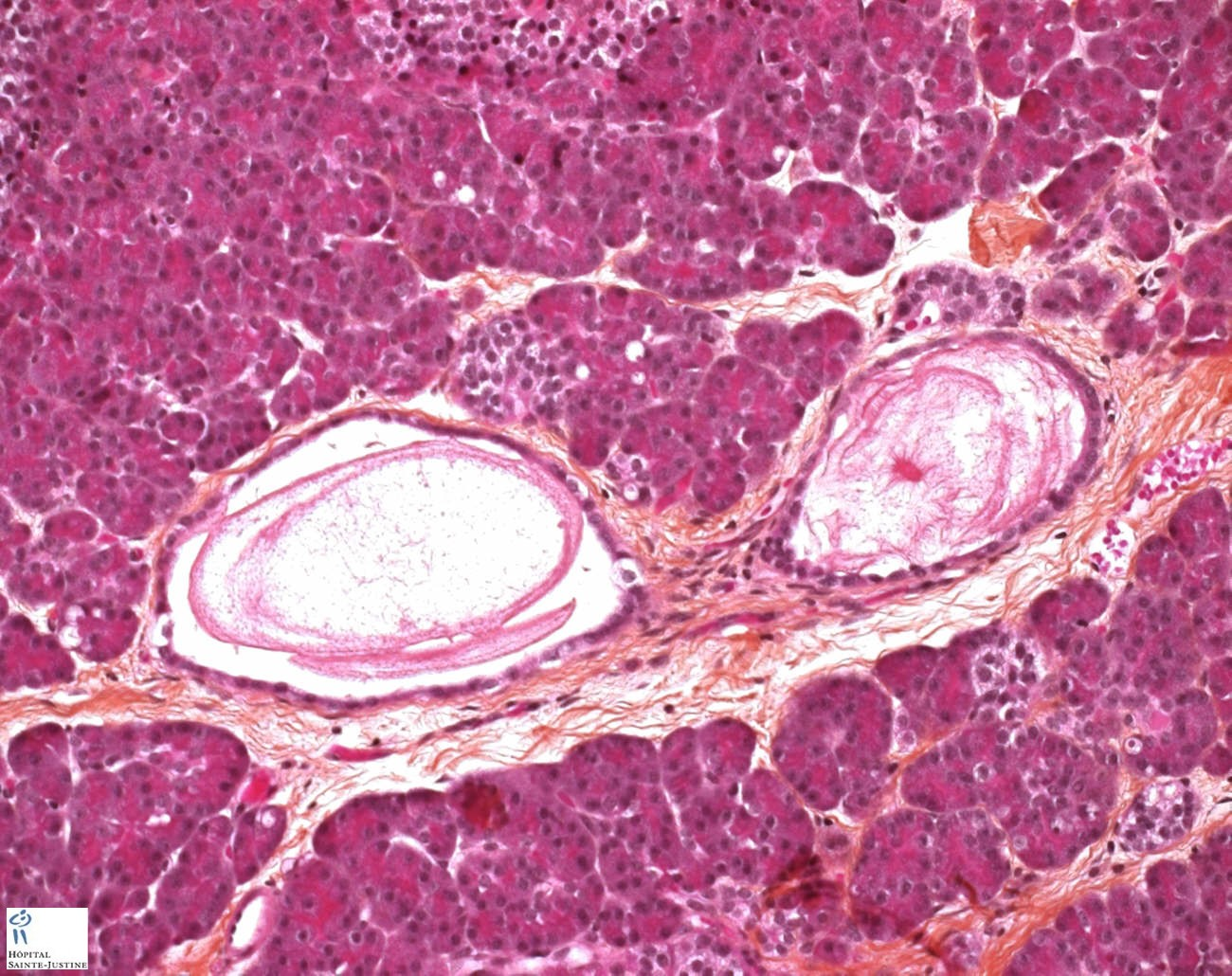 Histology Of Endocrine System 2