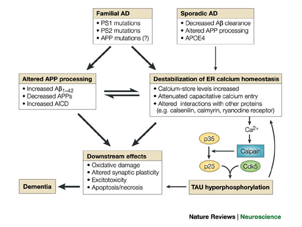 alzheimers disease and calcium signalling Journal of alzheimer's disease - volume 47,  calcium ions are crucial in the process of information transmission and  targeting calcium-signaling pathways and.