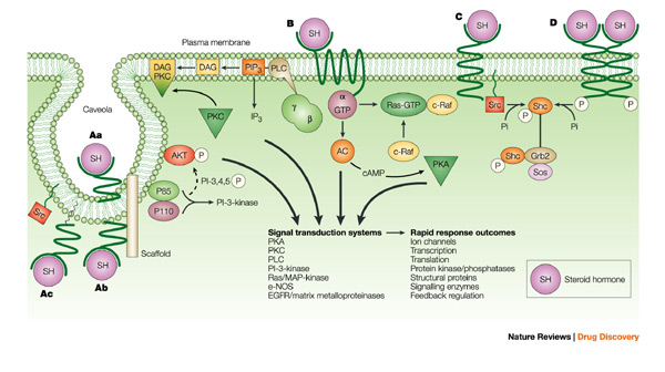 compare cell signaling mechanisms steroid hormones