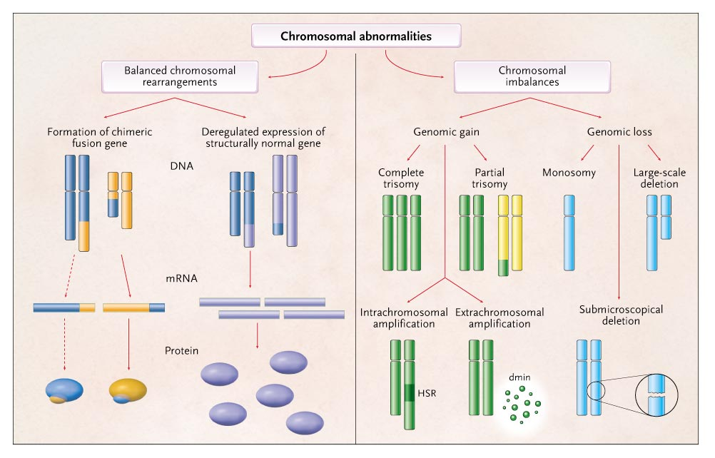 chromosomal abnormalities Chromosome abnormalities usually happen as a result of an error in cell division.