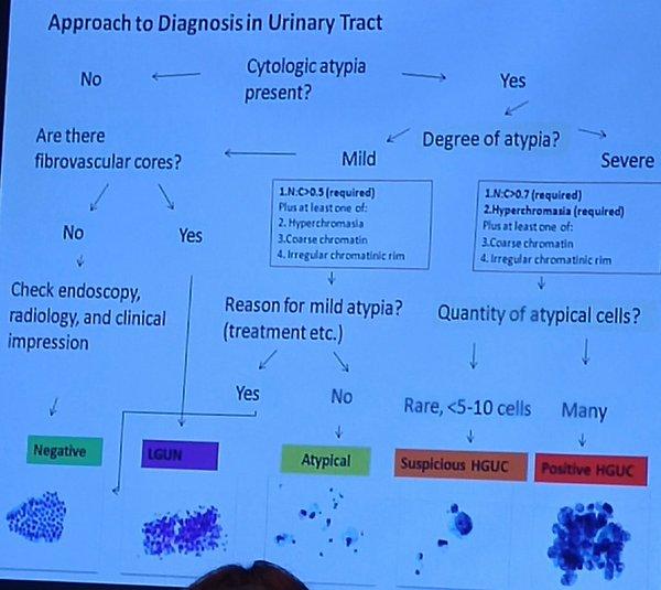 Paris System For Reporting Urinary Cytology Humpath Com