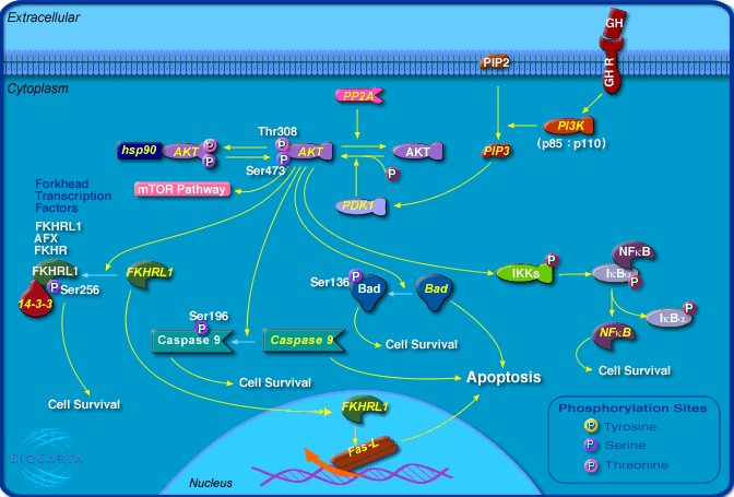 map kinase with Spip on Full additionally Pattern Recognition Receptors additionally Fig1 likewise Spip moreover Watch.