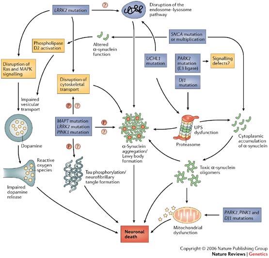Parkinson Disease Humpath Com Human Pathology