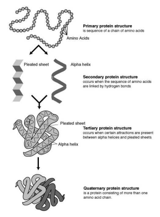 Human Proteins Humpath Human Pathology