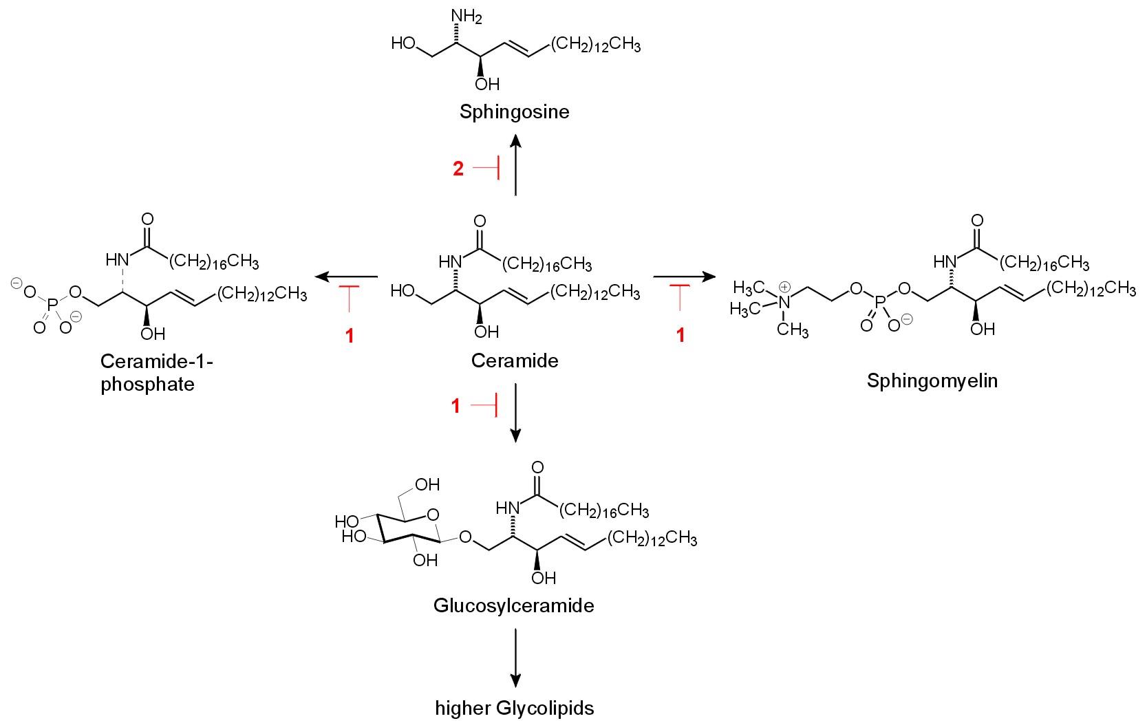 Sphingomyelin Structure sphingolipid - Humpath...